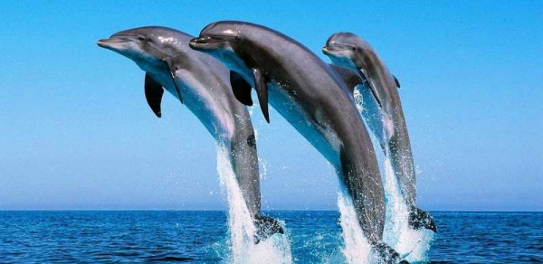 Watching Dolphin Trips in Egypt